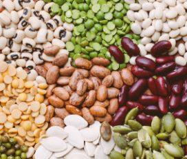 Hari Bhumi Seeds